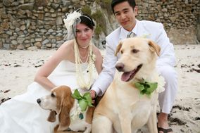 Wedding And Pet's