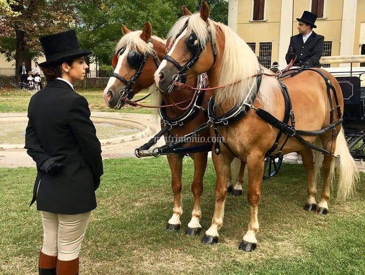 Cavalli e grum