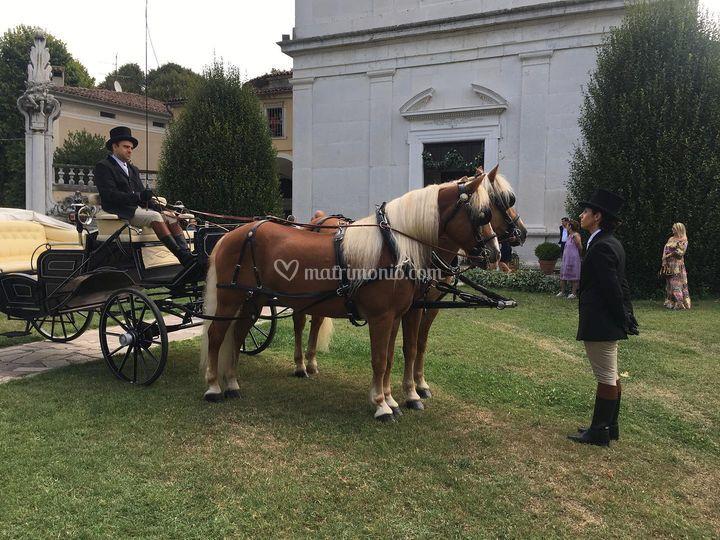 Carrozza - F.lli Zucchi Carrozze e Cavalli
