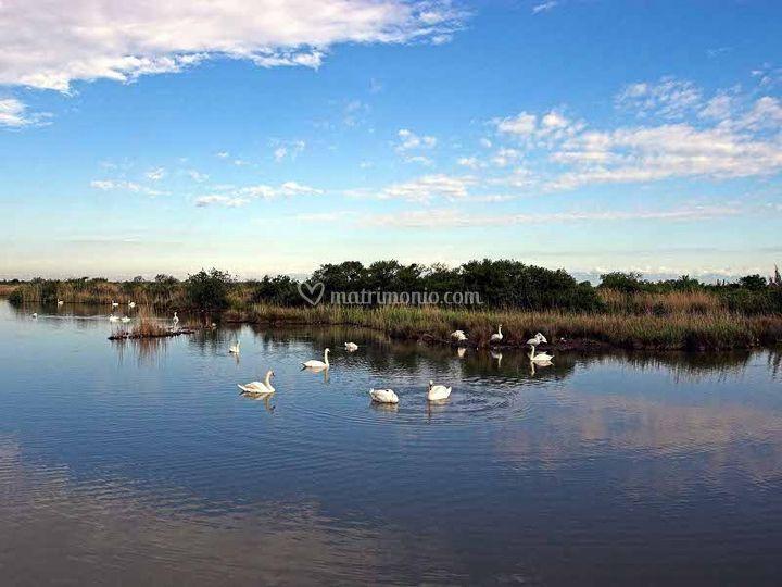 Laguna e cigni
