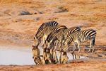 Namibia, Etosha Park