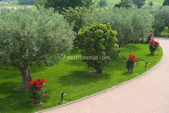 Il parco degli olivi