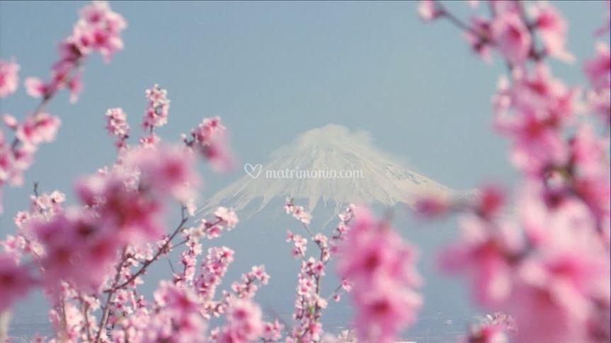 Monte Fuji e ciliegi Giappone