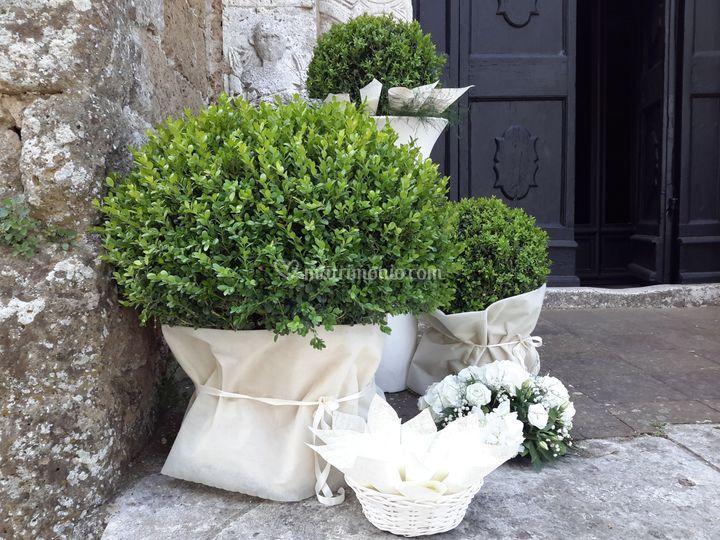 Matrimonio Tema Infinito : La primavera piante e fiori