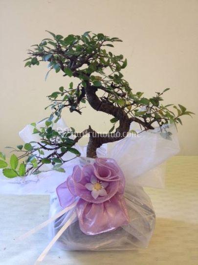 Bomboniera bonsai con organza