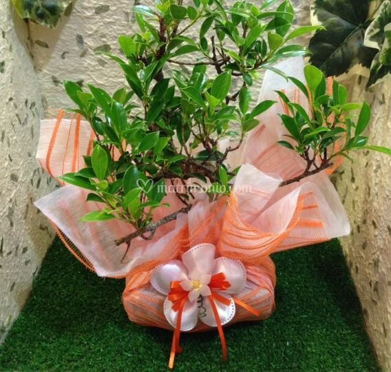 Bomboniera bonsai arancio