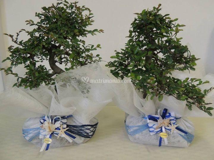 "Bomboniera bonsai tema ""mare"""