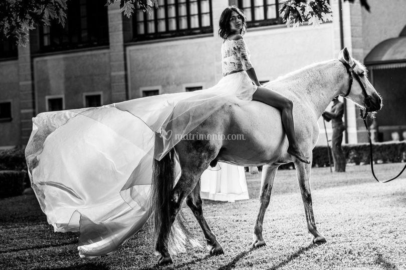 Il nostro cavallo andaluso