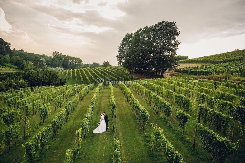 Foto nelle vigne