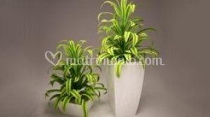 Migliori fiori e planti