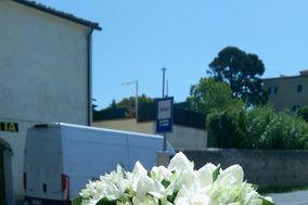 Montenero in Fiore