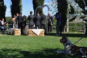 Dog Sitter Toscana