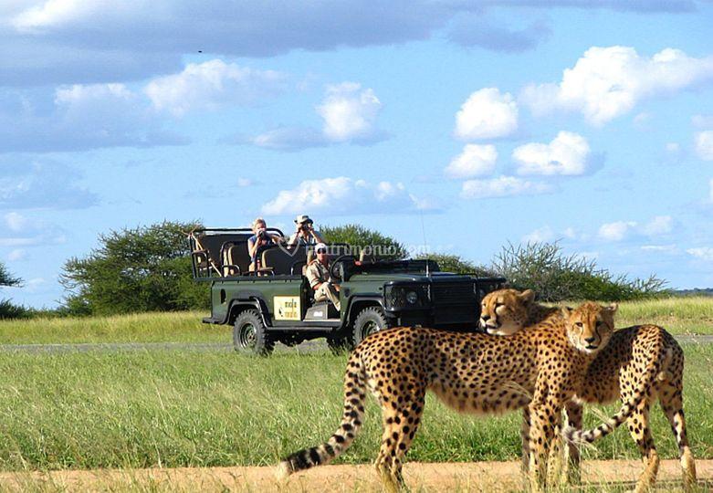 Suf Africa - Safari
