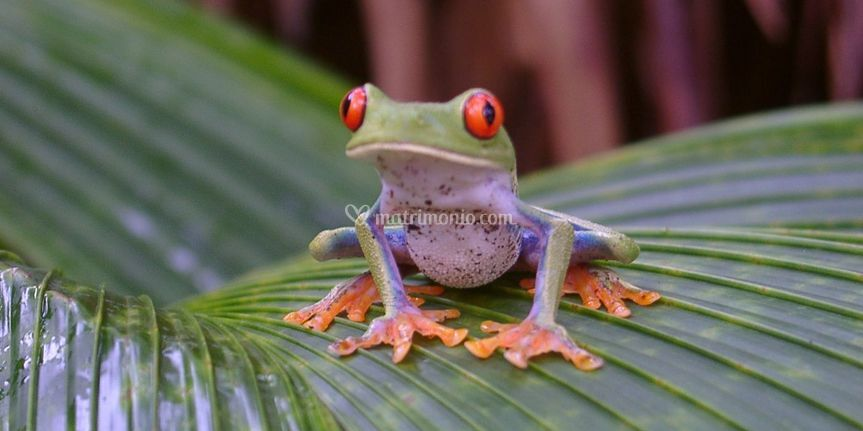 Costa Rica - Natura