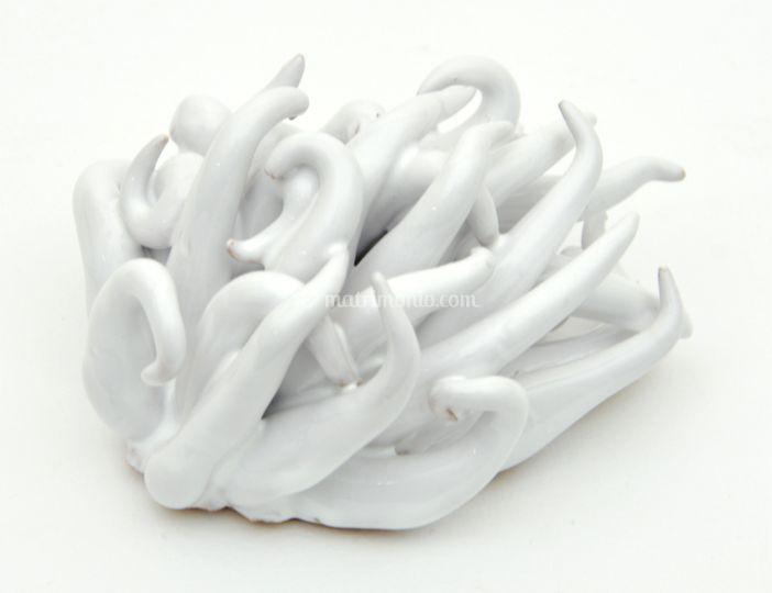 Anemone di mare