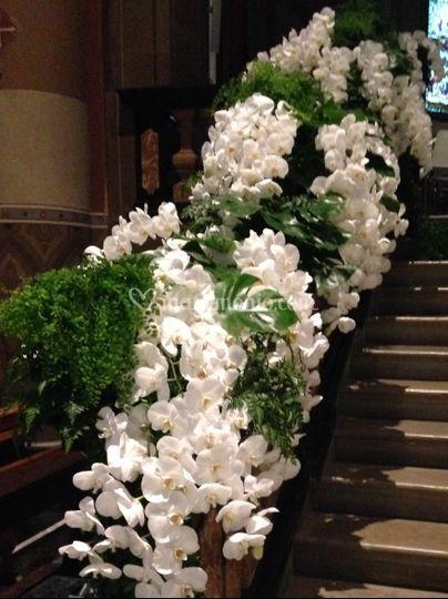Caduta di orchidee