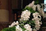 Caduta di orchidee di Marco Segantin