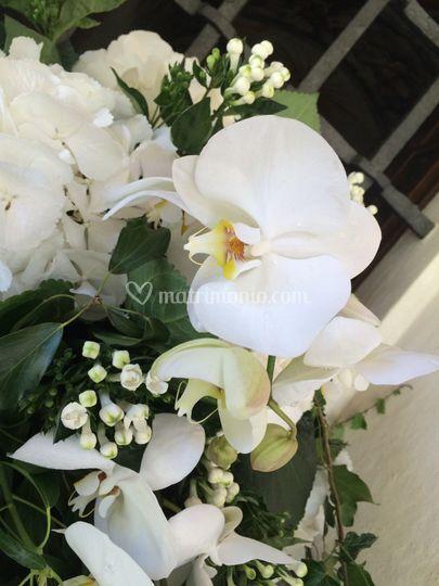 Orchidea e ortensia
