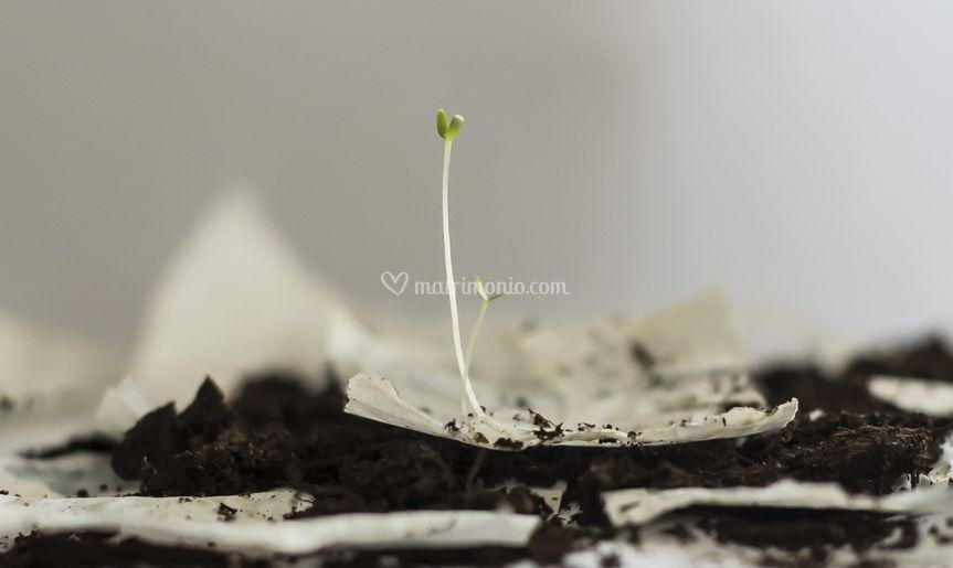 Germoglio da carta con semi
