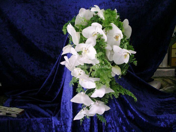 Bouquet phaleonopsis