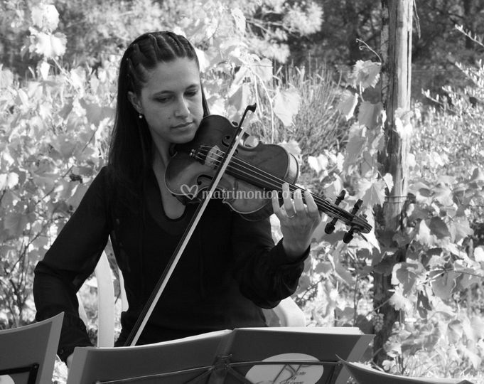 Violino ad un ricevimento