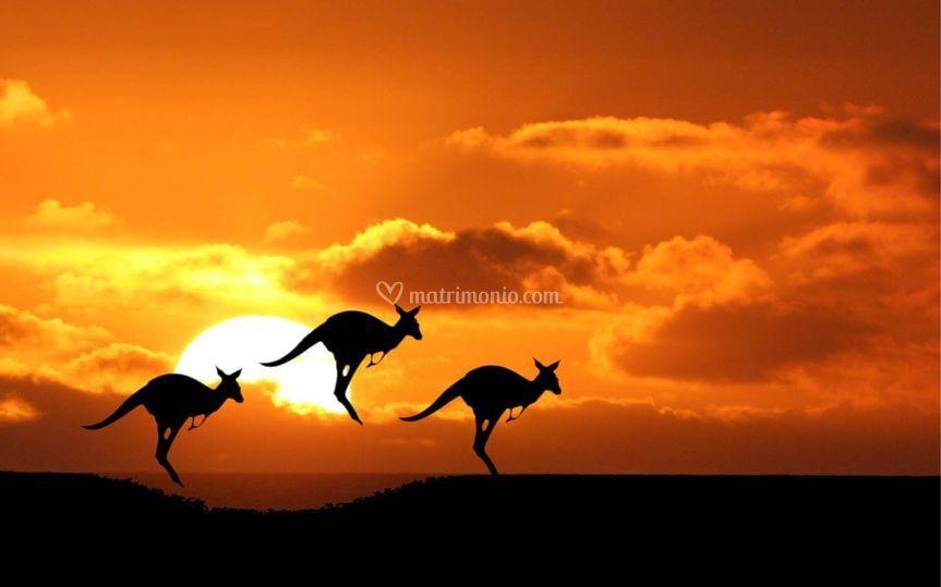 La terra dei Canguri