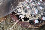 Bottigliette con liquore