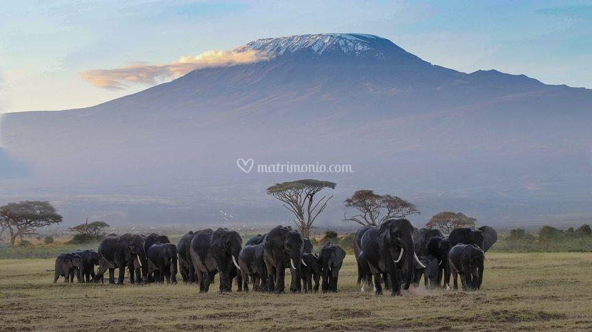 Africa - safari