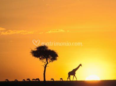 Idea viaggio. Kenya