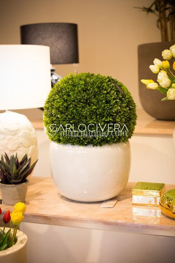 Le nostre piante artificiali