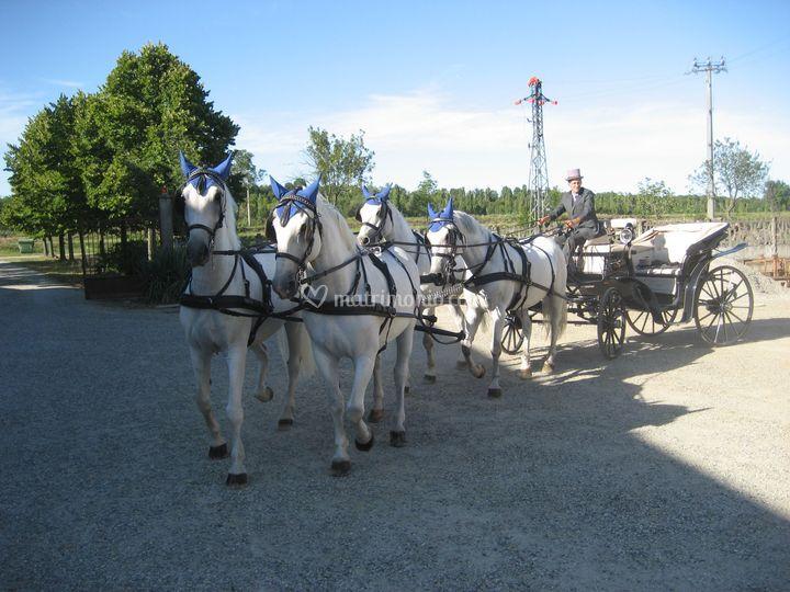 Matrimonio quattro cavalli