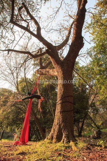 Tessuto aereo gancio albero
