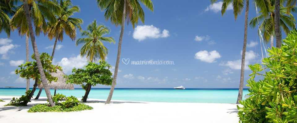 Reggaenition Travel Maldive