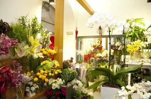 Varietà di fiori