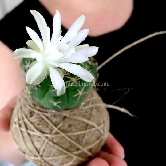Fatkokedama in fiore