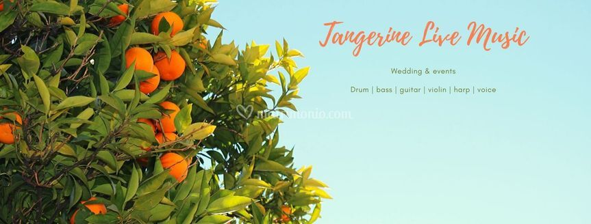 The Tangerine band