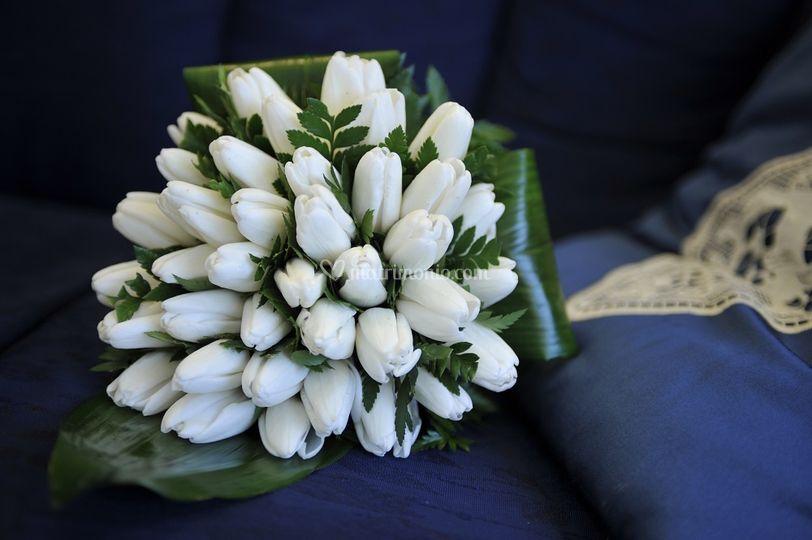 Goccia di tulipani bianchi