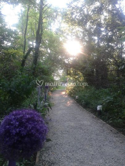 Sentiero romantico nel bosco