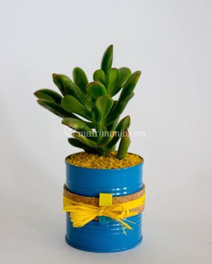 Bomboniera pianta grassa