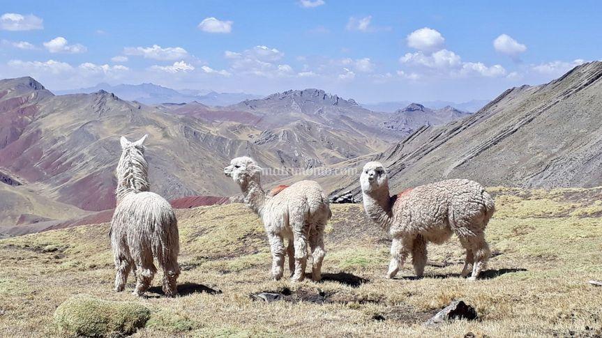 Vinicunca, Perù