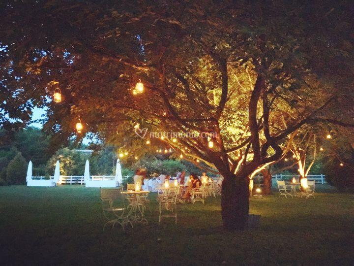 Gli alberi illuminati