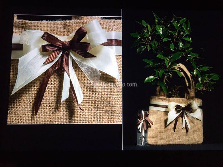 Bonsai do for Glicine bonsai prezzo
