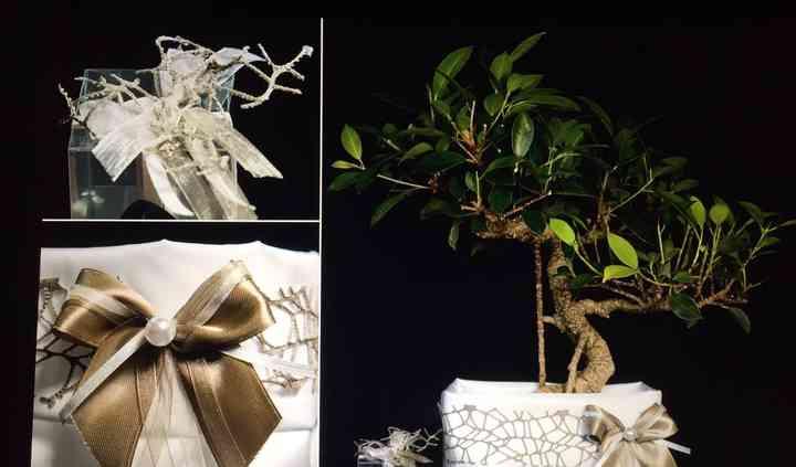 Ficus retusa - Taffetà/tortora