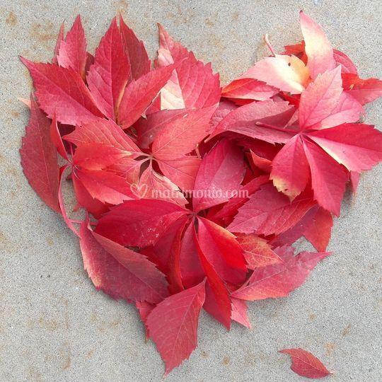 Cuore di foglie