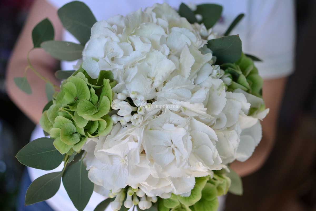 Bouquet Sposa Ortensie.Bouquet Ortensie E Buvardia Di Fiori Co Foto 31