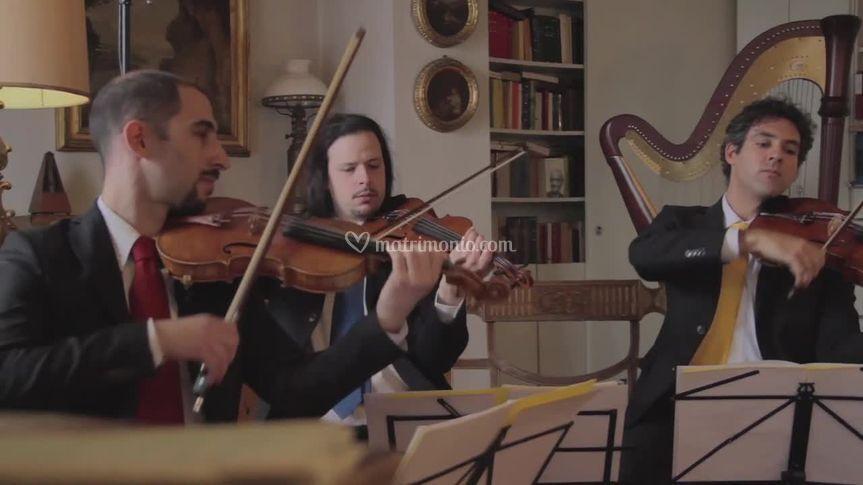 Violini e viola