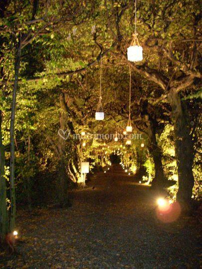 Galleria di carpini night