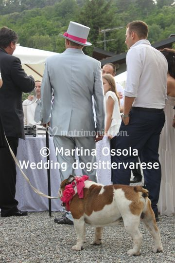 Sposo e cane