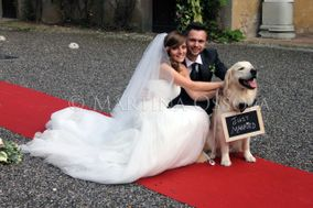 Wedding Dog Specialist Martina Ossola