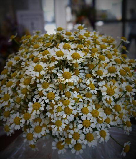 Bouquet camomilla